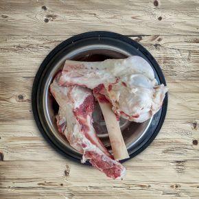 Röhrenknochen, längs und quer aufgesägt